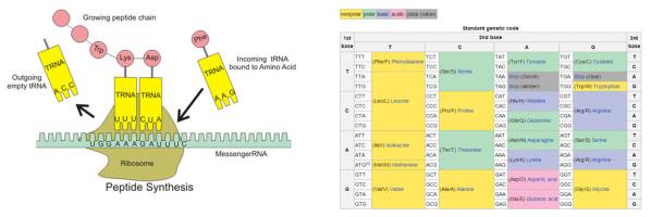 DNA-tason Turing kone